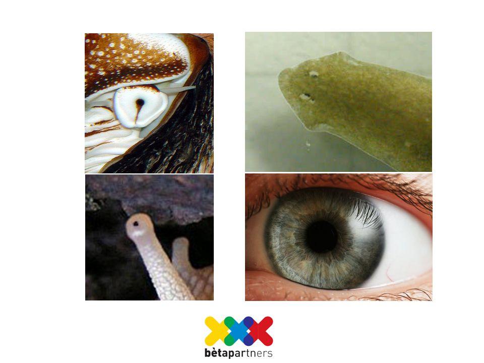 Het oog van een platworm Zenuwcellen hebben een gedeelte dat gevoelig is voor lichtontvangst.