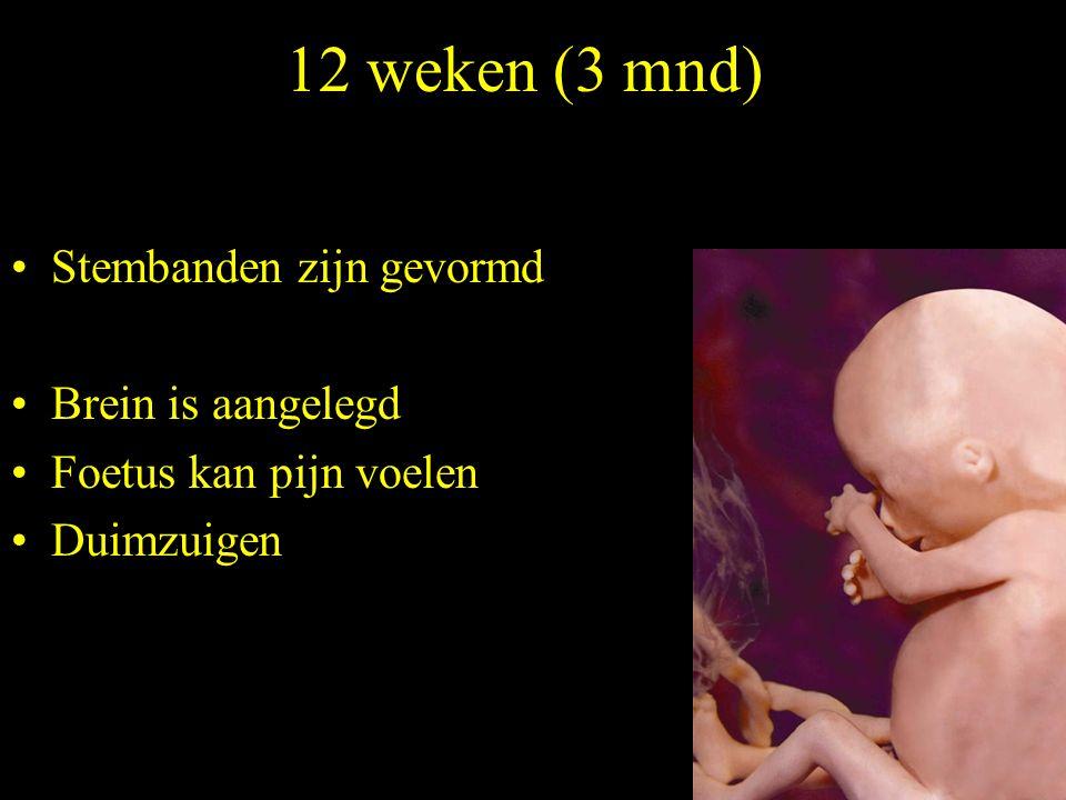 12 weken (3 mnd) Stembanden zijn gevormd Brein is aangelegd Foetus kan pijn voelen Duimzuigen
