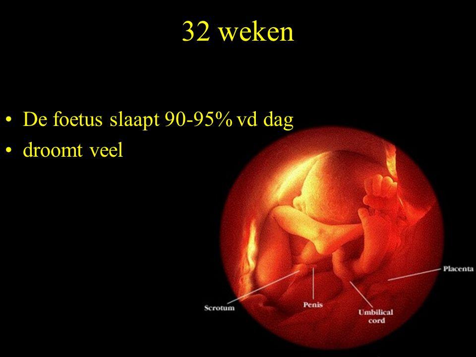 32 weken De foetus slaapt 90-95% vd dag droomt veel