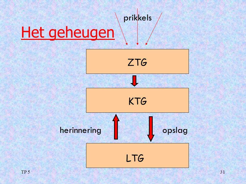 TP 531 Het geheugen ZTG KTG LTG opslagherinnering prikkels
