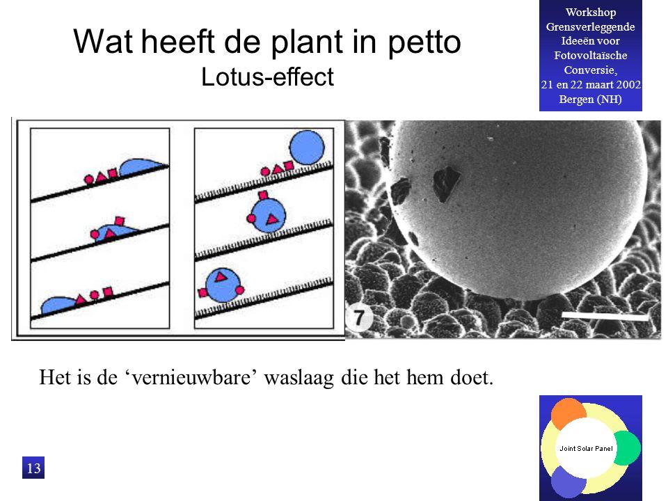 Workshop Grensverleggende Ideeën voor Fotovoltaïsche Conversie, 21 en 22 maart 2002 Bergen (NH) 13 Wat heeft de plant in petto Lotus-effect Het is de 'vernieuwbare' waslaag die het hem doet.