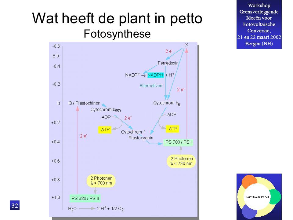 Workshop Grensverleggende Ideeën voor Fotovoltaïsche Conversie, 21 en 22 maart 2002 Bergen (NH) 32 Wat heeft de plant in petto Fotosynthese