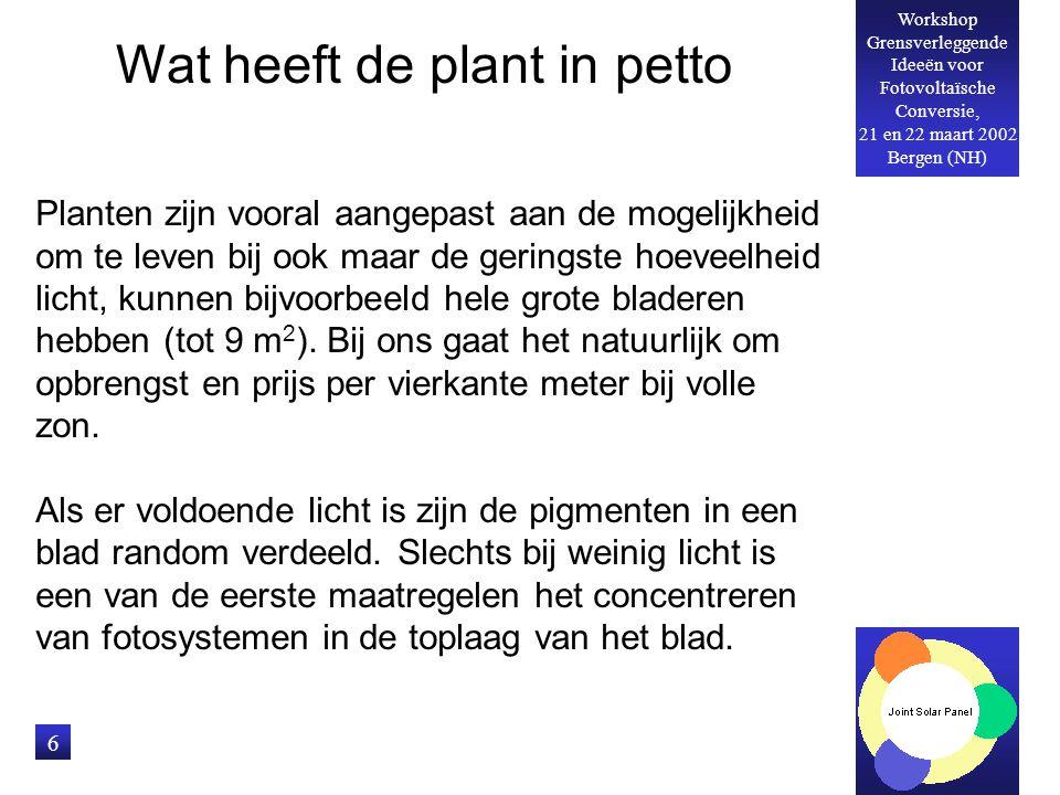 Workshop Grensverleggende Ideeën voor Fotovoltaïsche Conversie, 21 en 22 maart 2002 Bergen (NH) 6 Planten zijn vooral aangepast aan de mogelijkheid om te leven bij ook maar de geringste hoeveelheid licht, kunnen bijvoorbeeld hele grote bladeren hebben (tot 9 m 2 ).
