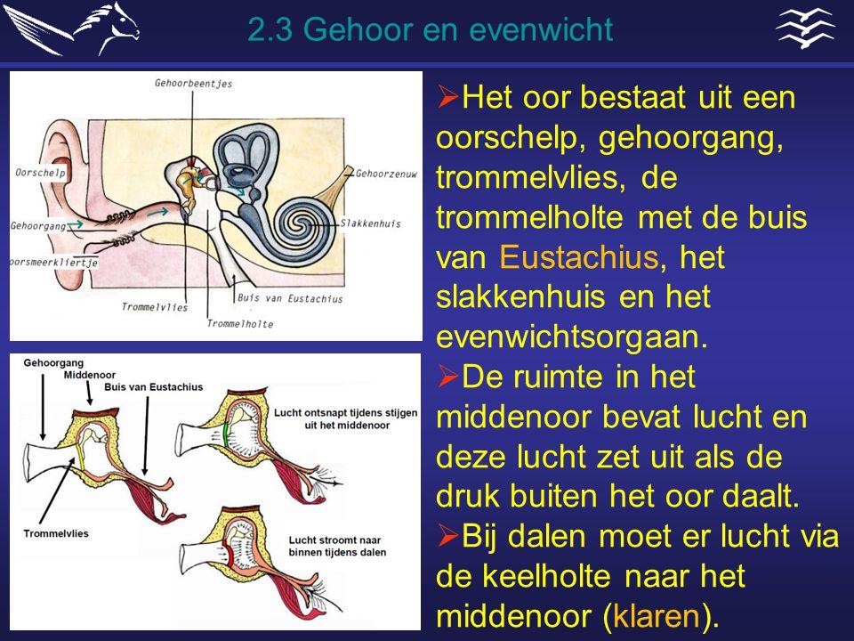  Het oor bestaat uit een oorschelp, gehoorgang, trommelvlies, de trommelholte met de buis van Eustachius, het slakkenhuis en het evenwichtsorgaan. 