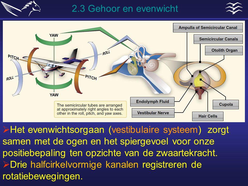  Het evenwichtsorgaan (vestibulaire systeem) zorgt samen met de ogen en het spiergevoel voor onze positiebepaling ten opzichte van de zwaartekracht.