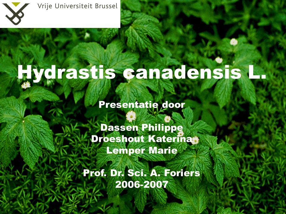 Hydrastis canadensis L. Presentatie door Dassen Philippe Droeshout Katerina Lemper Marie Prof. Dr. Sci. A. Foriers 2006-2007