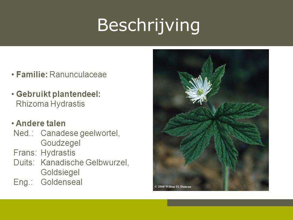 Beschrijving Familie: Ranunculaceae Gebruikt plantendeel: Rhizoma Hydrastis Andere talen Ned.: Canadese geelwortel, Goudzegel Frans: Hydrastis Duits: