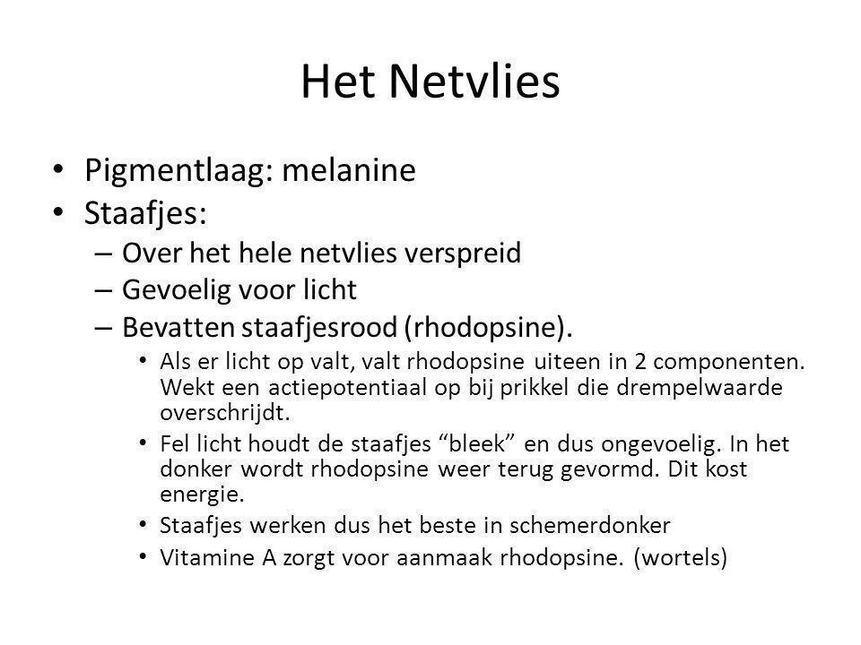 Het Netvlies Pigmentlaag: melanine Staafjes: – Over het hele netvlies verspreid – Gevoelig voor licht – Bevatten staafjesrood (rhodopsine). Als er lic