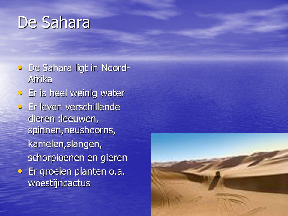 De Sahara De Sahara ligt in Noord- Afrika De Sahara ligt in Noord- Afrika Er is heel weinig water Er is heel weinig water Er leven verschillende dieren :leeuwen, spinnen,neushoorns, Er leven verschillende dieren :leeuwen, spinnen,neushoorns,kamelen,slangen, schorpioenen en gieren Er groeien planten o.a.