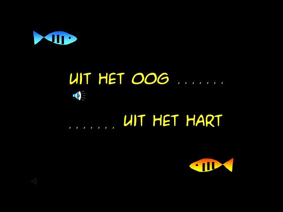 De vissen doen precies wat de theorie voorspelt: reactiedrempel P.