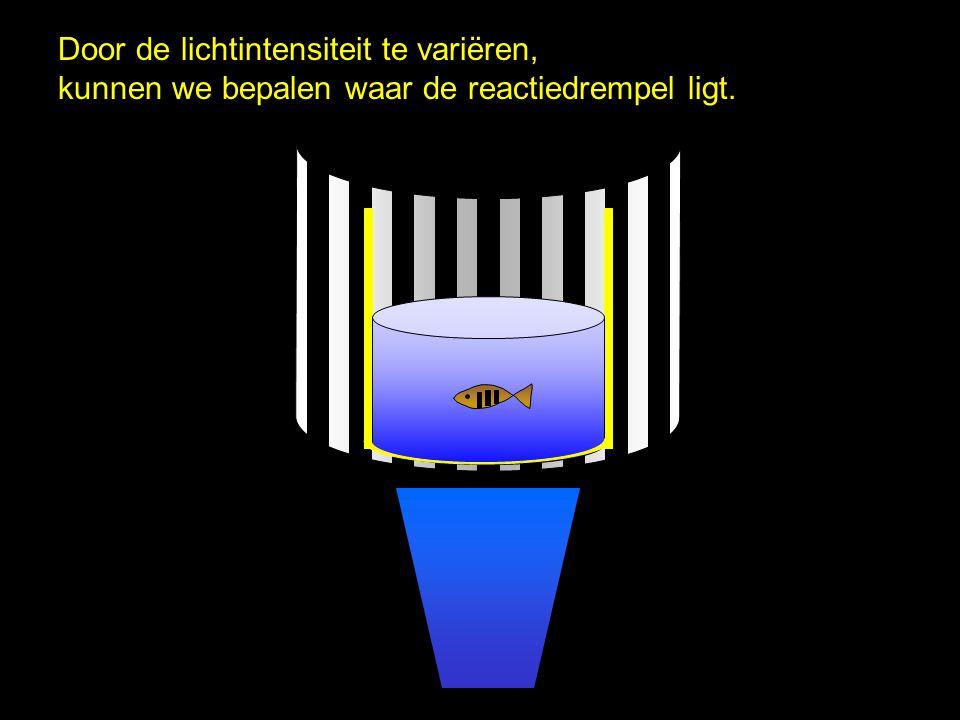Door de lichtintensiteit te variëren, kunnen we bepalen waar de reactiedrempel ligt.