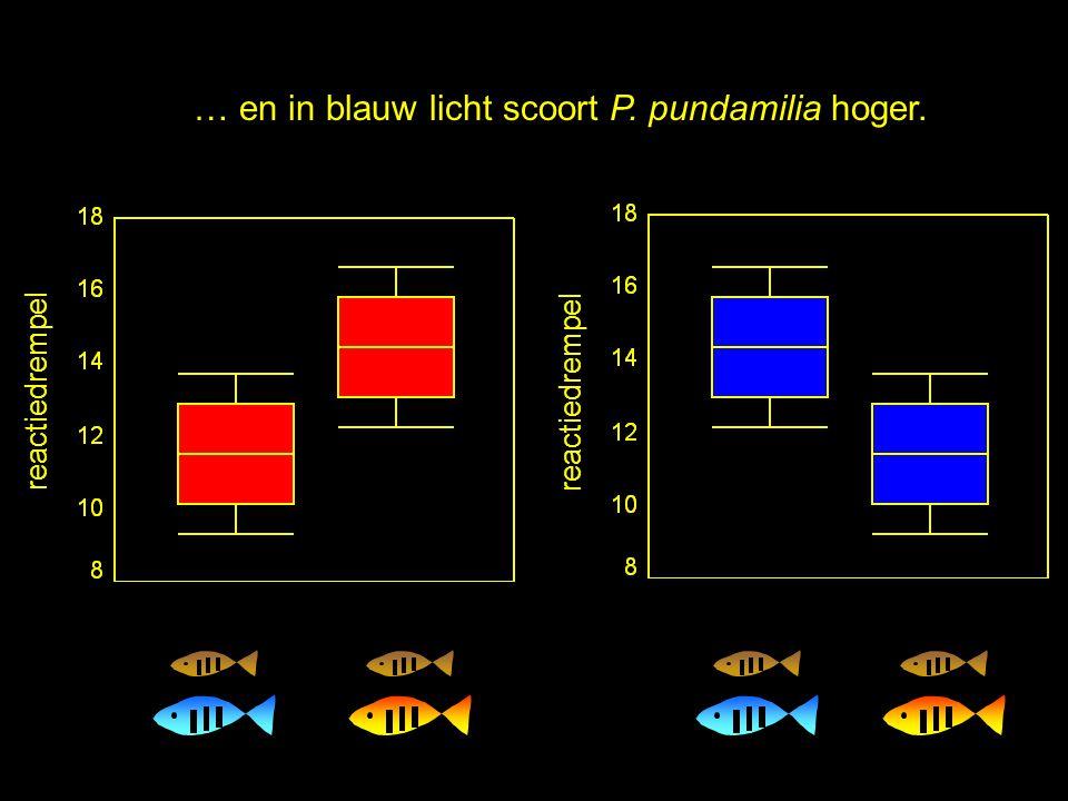 reactiedrempel Dit is wat we verwachten:In rood licht scoort P. nyererei hoger....… en in blauw licht scoort P. pundamilia hoger.