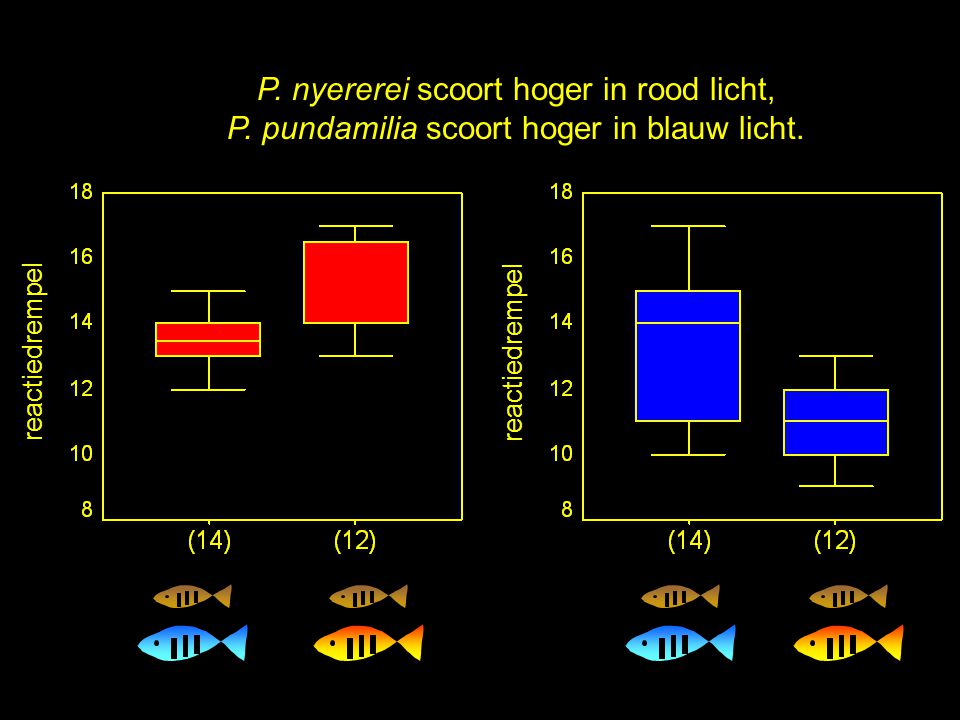 De vissen doen precies wat de theorie voorspelt: reactiedrempel P. nyererei scoort hoger in rood licht, P. pundamilia scoort hoger in blauw licht.