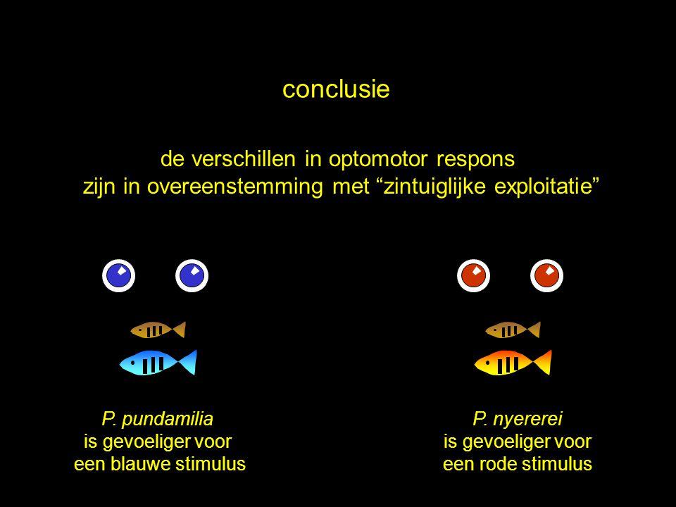 """conclusie de verschillen in optomotor respons zijn in overeenstemming met """"zintuiglijke exploitatie"""" P. pundamilia is gevoeliger voor een blauwe stimu"""