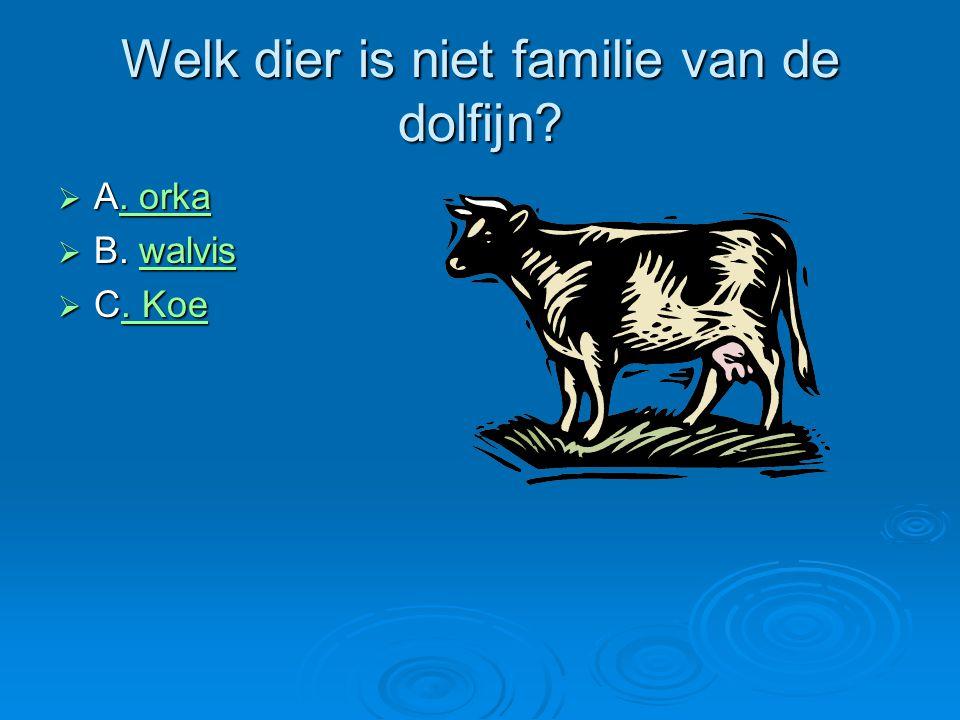 Welk dier is niet familie van de dolfijn?  A. orka. orka. orka  B. walvis walvis  C. Koe. Koe. Koe