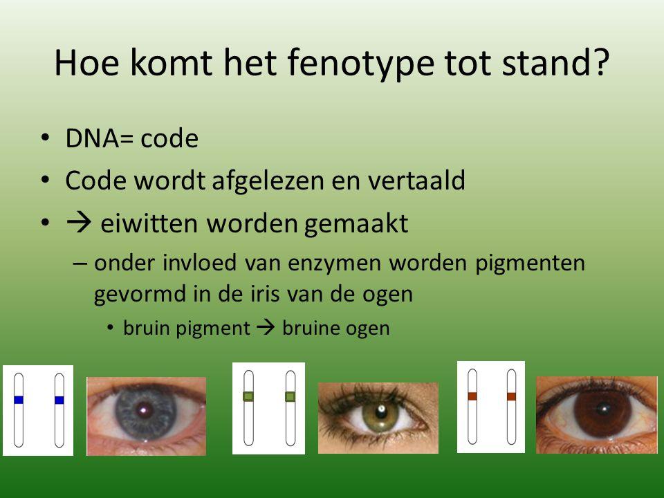 Hoe komt het fenotype tot stand? DNA= code Code wordt afgelezen en vertaald  eiwitten worden gemaakt – onder invloed van enzymen worden pigmenten gev