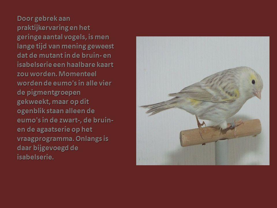 Door gebrek aan praktijkervaring en het geringe aantal vogels, is men lange tijd van mening geweest dat de mutant in de bruin- en isabelserie een haal