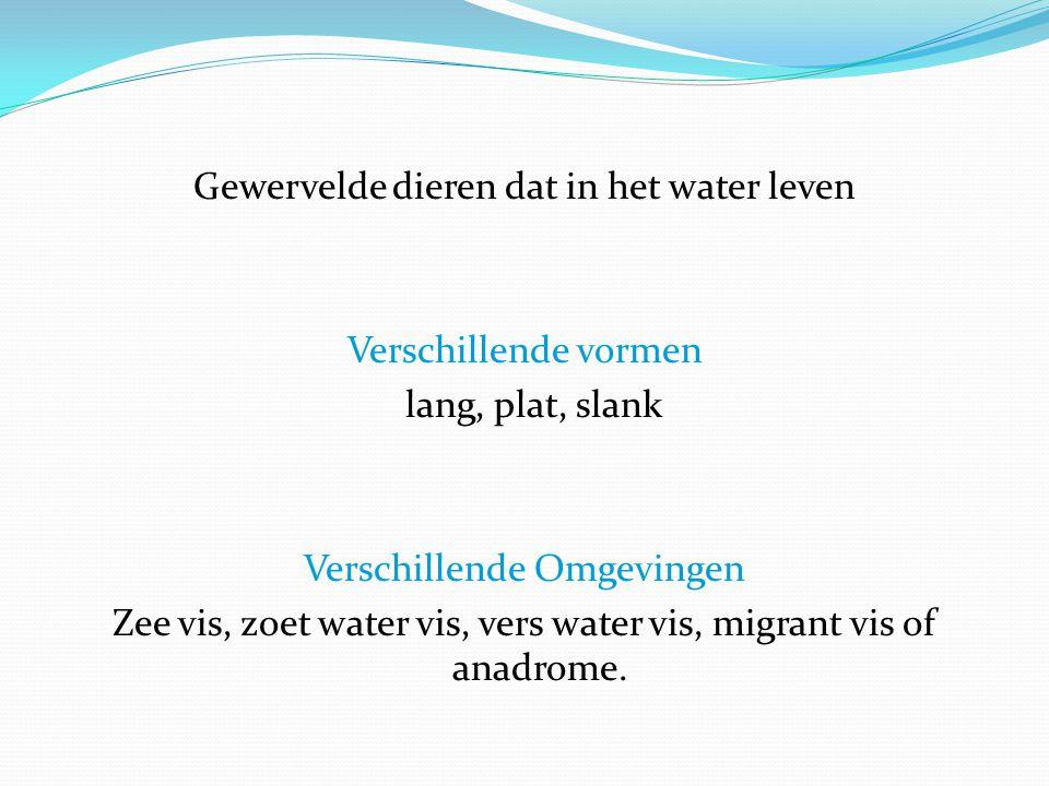 Verschillende vetgehalte: 1) Dun vis – minder dan 3% (Sole-vis, goudbrasem, forel en kabeljauw).