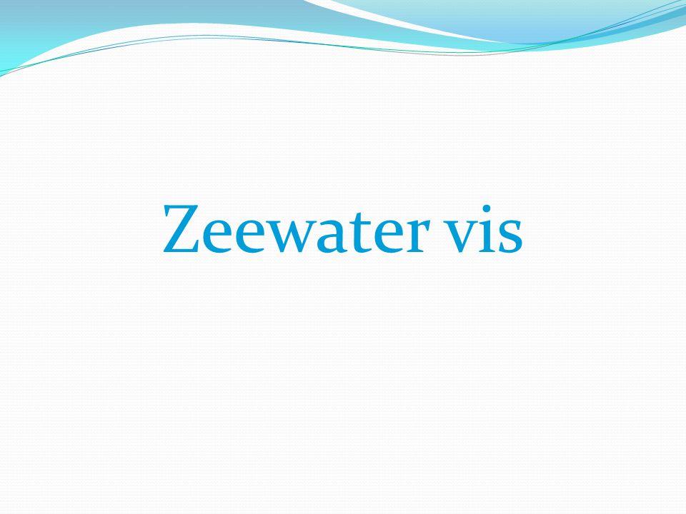 Zeewater vis