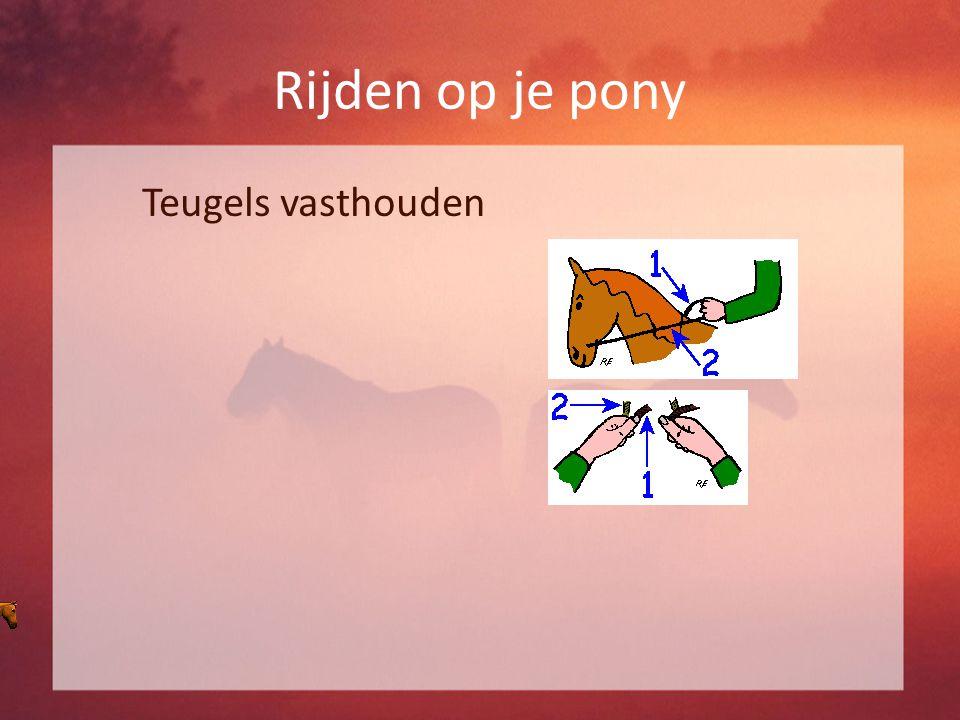 Rijden op je pony Teugels vasthouden