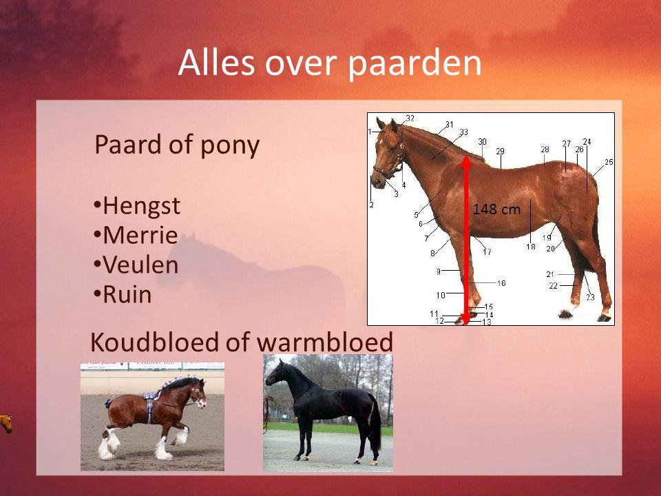 Alles over paarden Paard of pony 148 cm Koudbloed of warmbloed Hengst Merrie Veulen Ruin