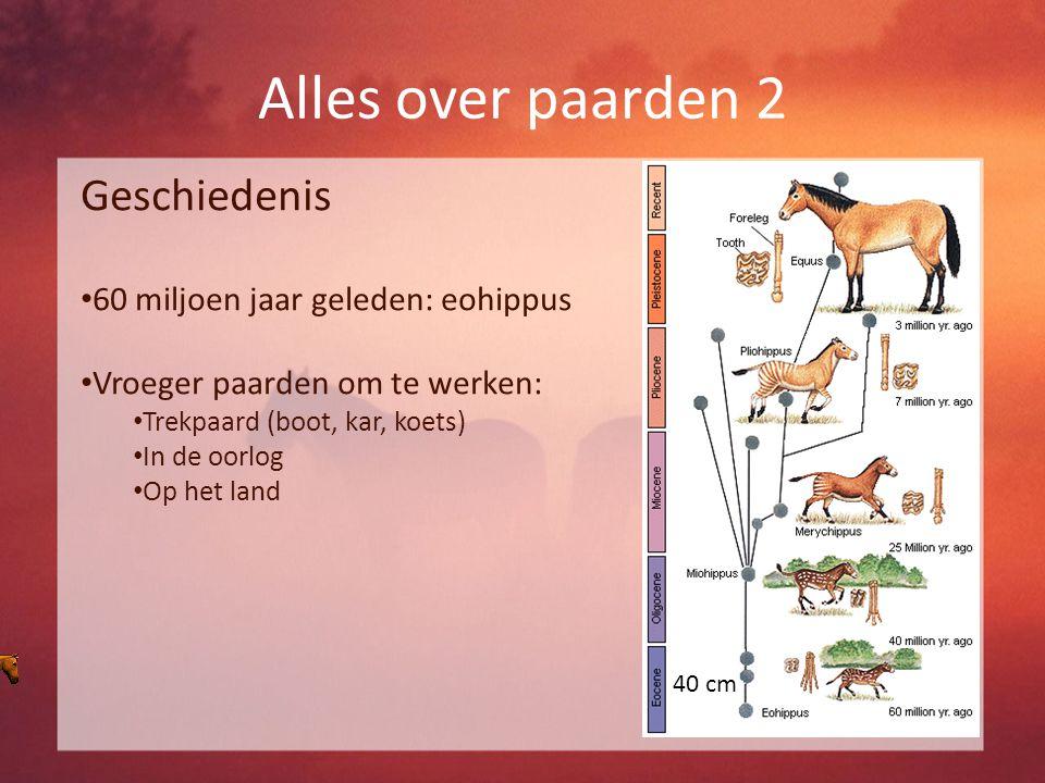 Alles over paarden 2 Geschiedenis 60 miljoen jaar geleden: eohippus Vroeger paarden om te werken: Trekpaard (boot, kar, koets) In de oorlog Op het land 40 cm