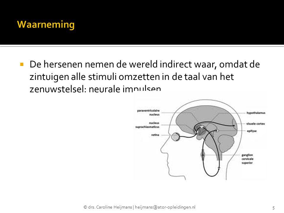  De hersenen nemen de wereld indirect waar, omdat de zintuigen alle stimuli omzetten in de taal van het zenuwstelsel: neurale impulsen © drs. Carolin
