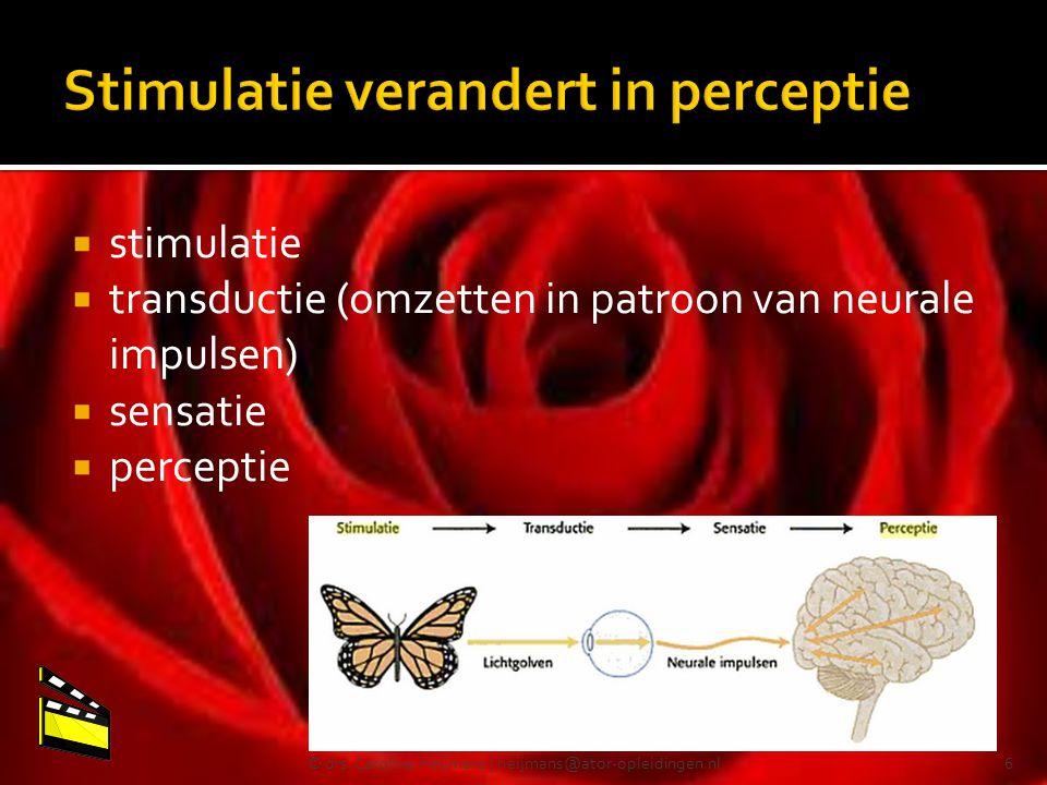  stimulatie  transductie (omzetten in patroon van neurale impulsen)  sensatie  perceptie © drs. Caroline Heijmans | heijmans@ator-opleidingen.nl6