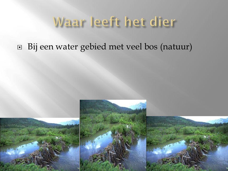  Bij een water gebied met veel bos (natuur)