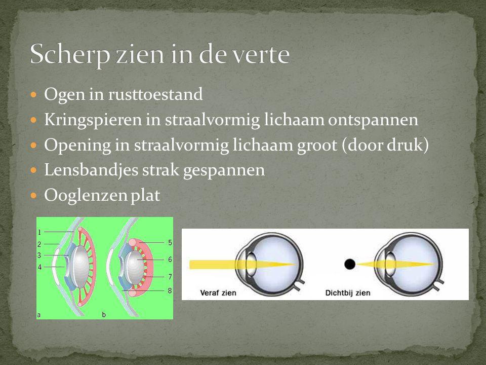 Ogen in rusttoestand Kringspieren in straalvormig lichaam ontspannen Opening in straalvormig lichaam groot (door druk) Lensbandjes strak gespannen Oog