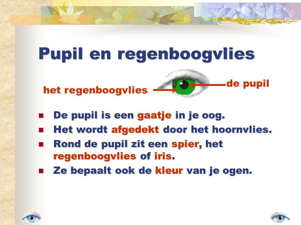 Pupil en regenboogvlies De pupil is een gaatje in je oog.