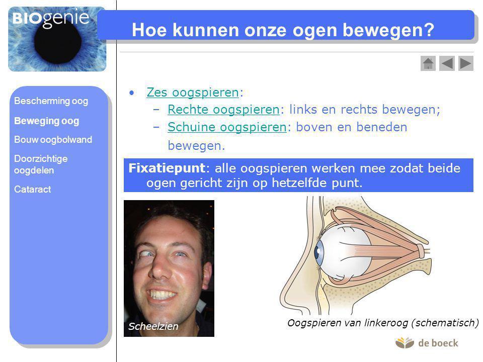 Hoe kunnen onze ogen bewegen? Oogspieren van linkeroog (schematisch) Zes oogspieren:Zes oogspieren –Rechte oogspieren: links en rechts bewegen;Rechte