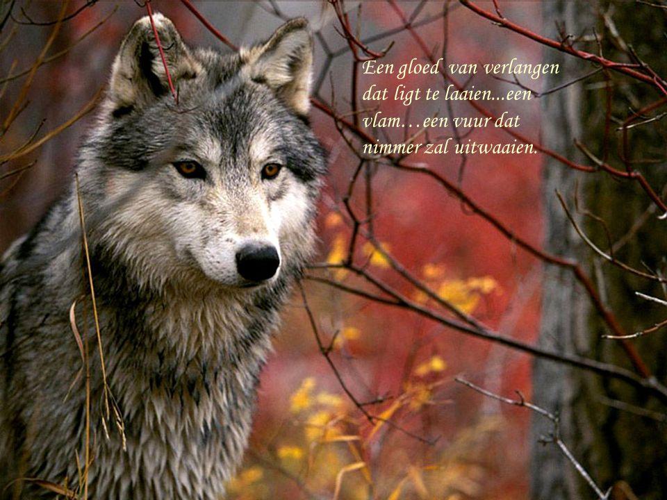 ontwaakt in vreemde mystiek… zilver grijs mijn wolven vacht.