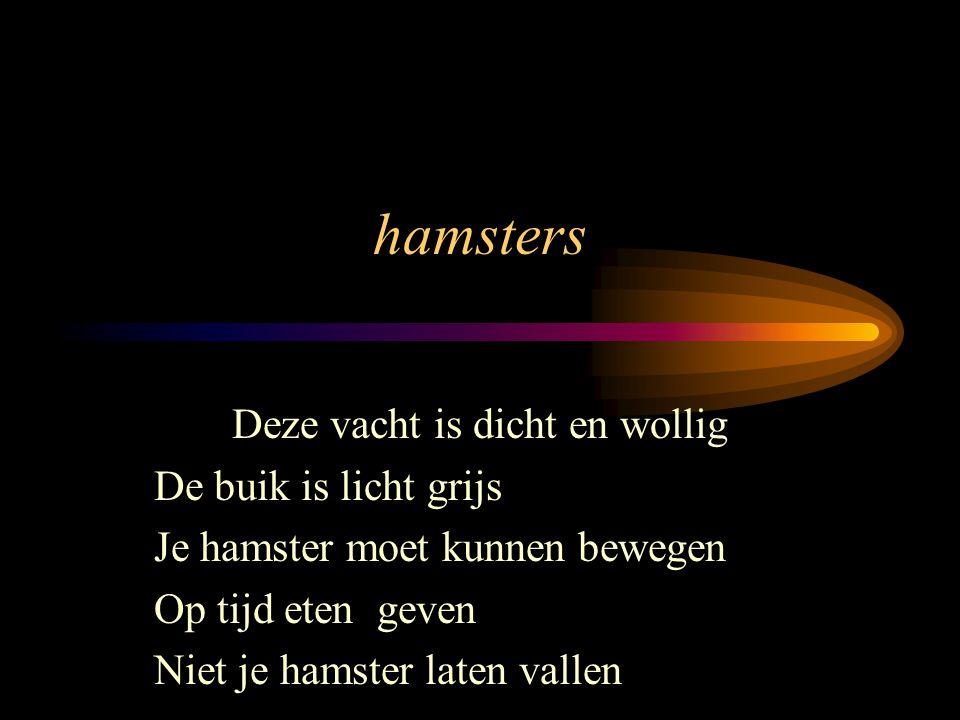 hamsters Deze vacht is dicht en wollig De buik is licht grijs Je hamster moet kunnen bewegen Op tijd eten geven Niet je hamster laten vallen