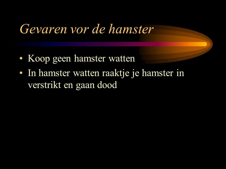 Gevaren vor de hamster Koop geen hamster watten In hamster watten raaktje je hamster in verstrikt en gaan dood