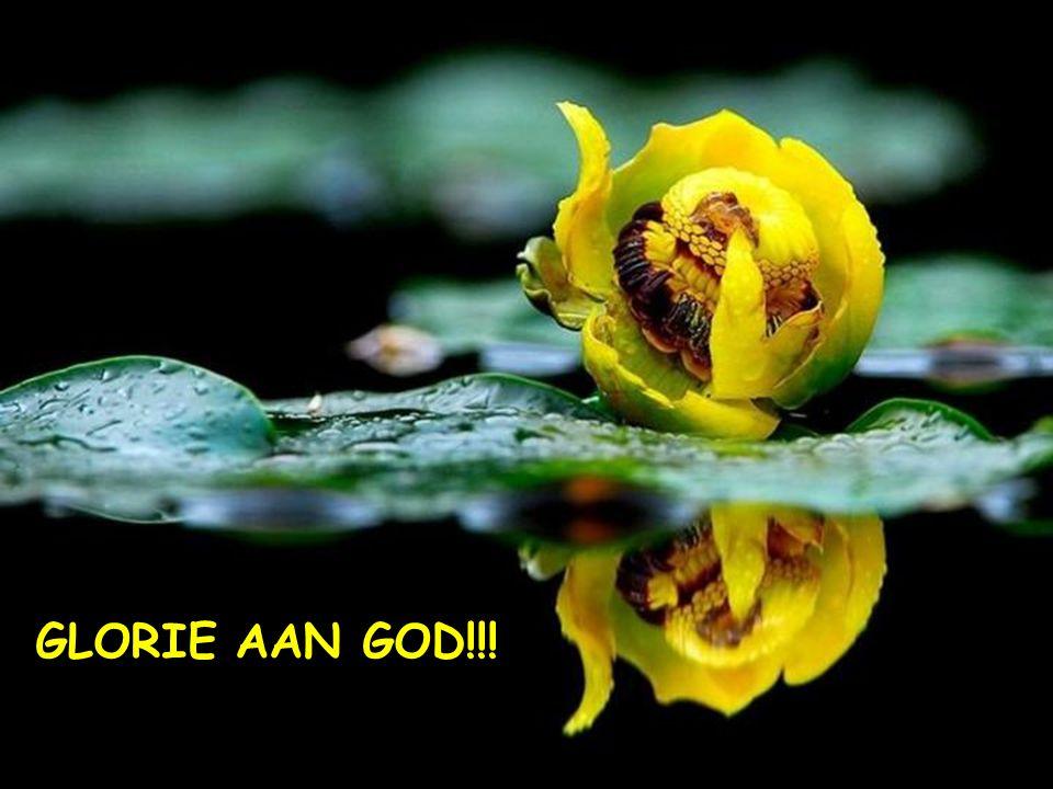 Laten we met iedereen delen dat… GOD EEN GEWELDIG GROTE LIEFDE VOOR ONS KOESTERT...