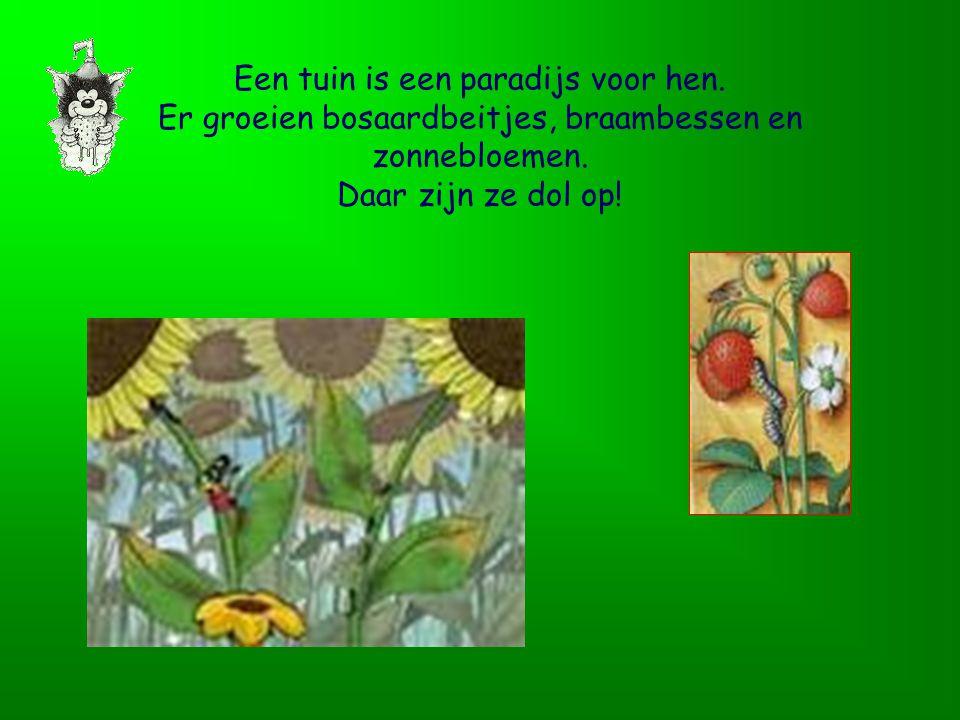 Een tuin is een paradijs voor hen.Er groeien bosaardbeitjes, braambessen en zonnebloemen.