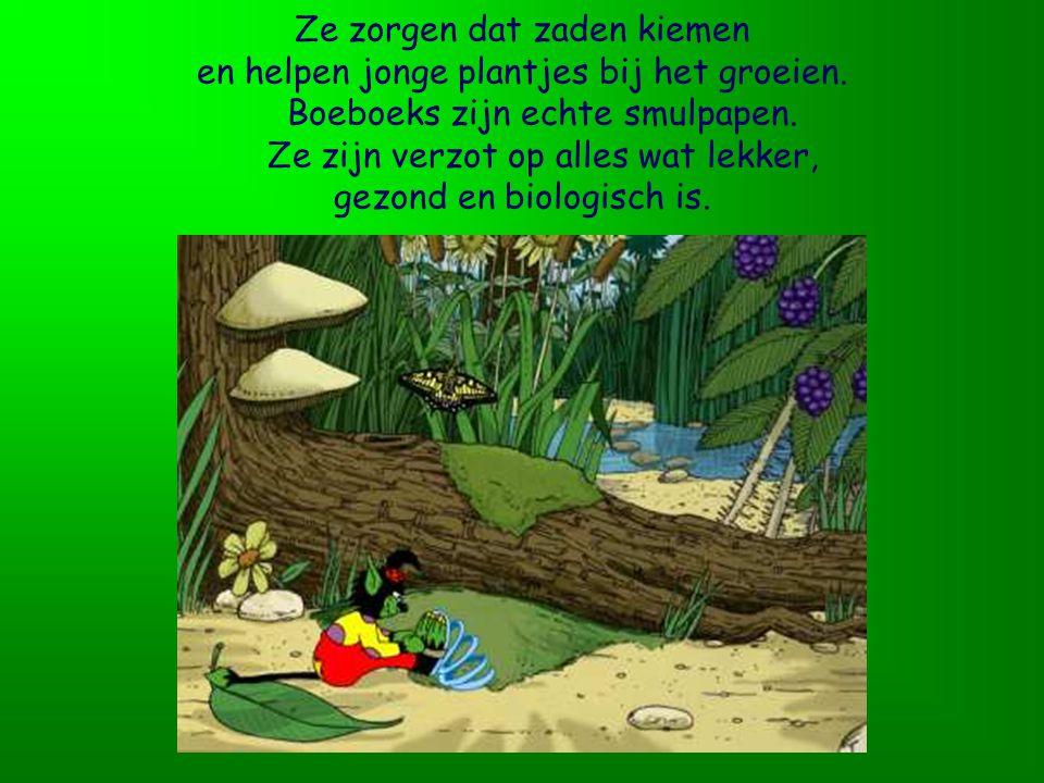 Een tuin is een paradijs voor hen. Er groeien bosaardbeitjes, braambessen en zonnebloemen. Daar zijn ze dol op!