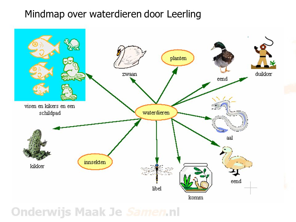 Mindmap over waterdieren door Leerling