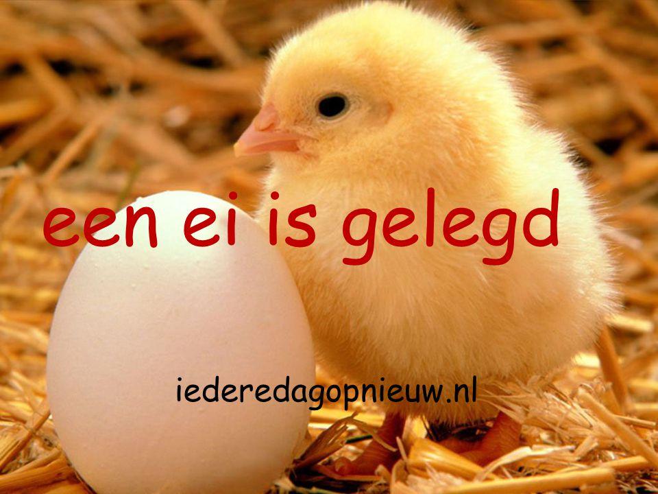 iederedagopnieuw.nl een ei is gelegd