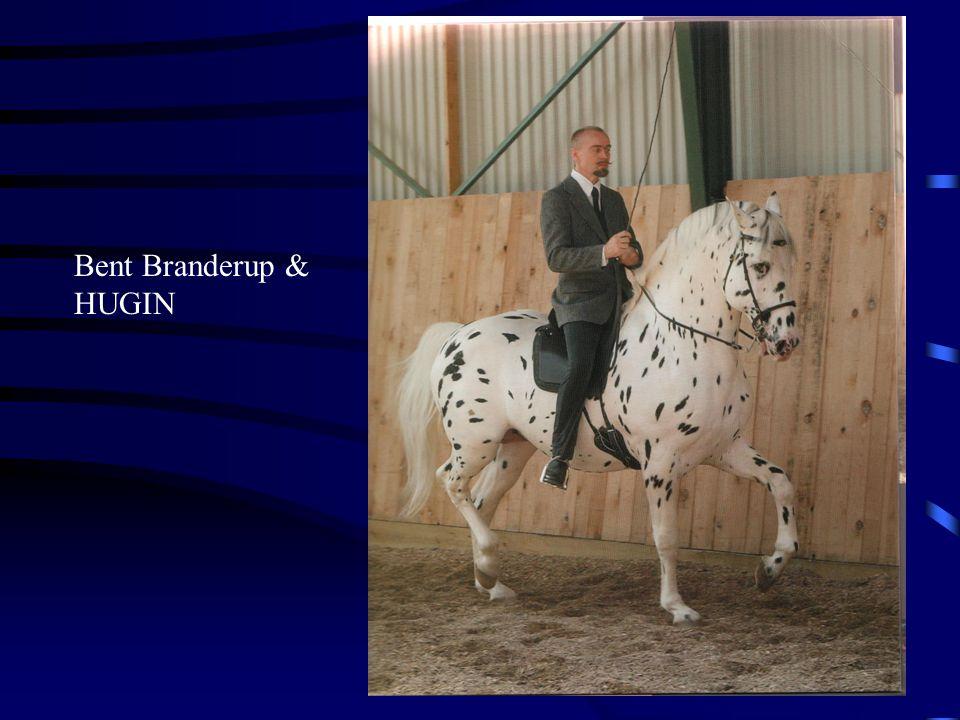 Paardenhouden.net een academische benadering van het paard Bronnen: Bent Branderup - Klassische Reitkunst (DVD en boeken) Marijke de Jong - paardenbegrijpen.nl - cursussen Horst Becker - Het atletische paard (Boek) Monty Roberts - Klaus F.