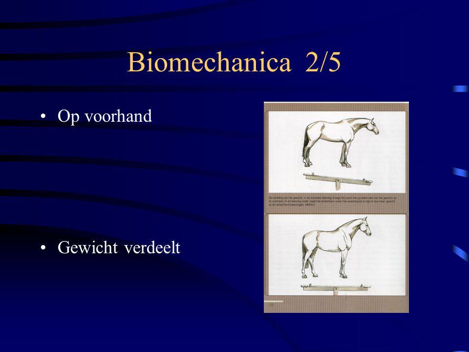 Biomechanica 2/5 Op voorhand Gewicht verdeelt