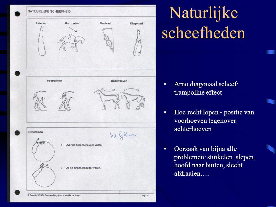 Naturlijke scheefheden Arno diagonaal scheef: trampoline effect Hoe recht lopen - positie van voorhoeven tegenover achterhoeven Oorzaak van bijna alle