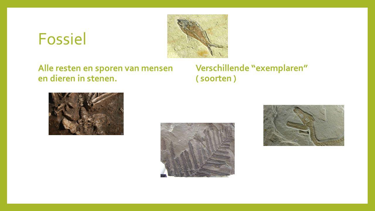 """Fossiel Alle resten en sporen van mensen en dieren in stenen. Verschillende """"exemplaren"""" ( soorten )"""