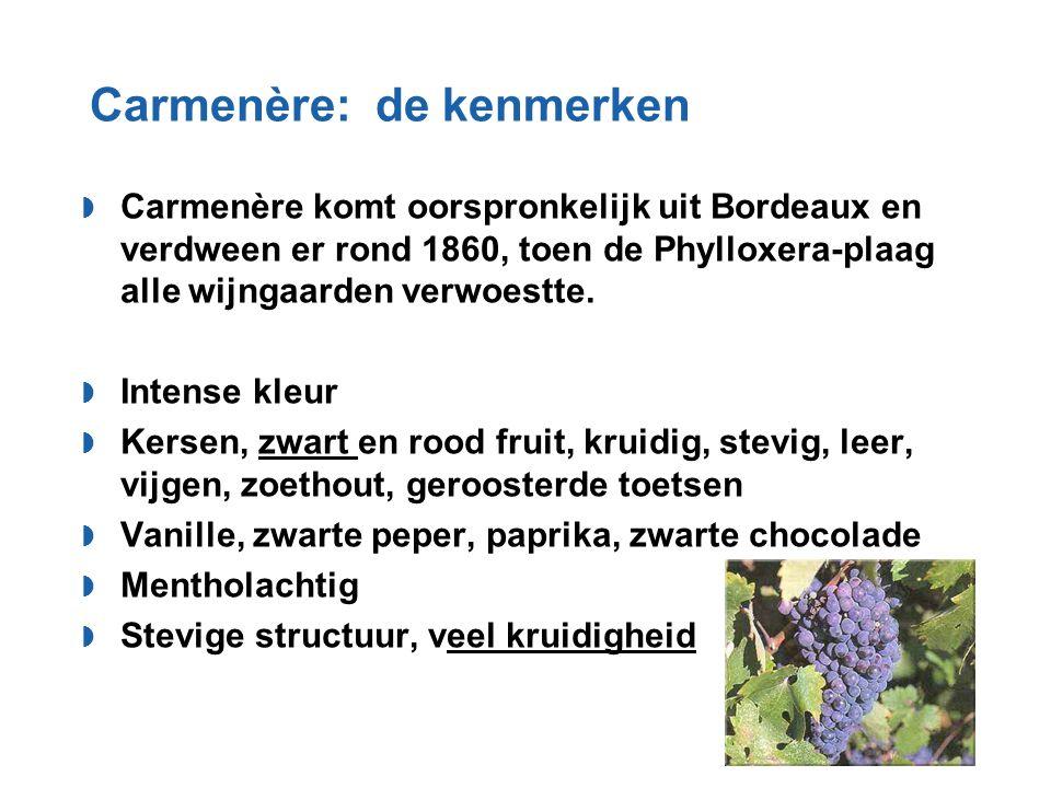 Carmenère: de kenmerken  Carmenère komt oorspronkelijk uit Bordeaux en verdween er rond 1860, toen de Phylloxera-plaag alle wijngaarden verwoestte. 