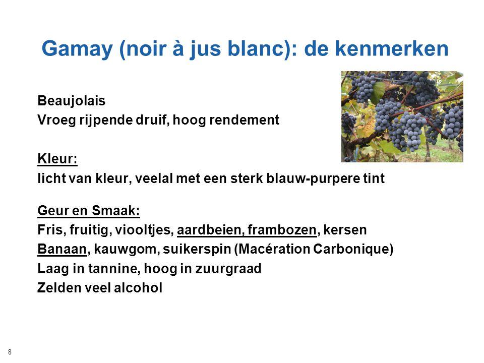Gamay (noir à jus blanc): de kenmerken Beaujolais Vroeg rijpende druif, hoog rendement Kleur: licht van kleur, veelal met een sterk blauw-purpere tint