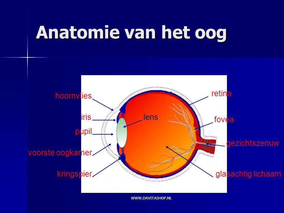 WWW.DAVITASHOP.NL Anatomie van het oog kringspier hoornvlies iris pupil voorste oogkamer retina fovea gezichtszenuw glasachtig lichaam lens