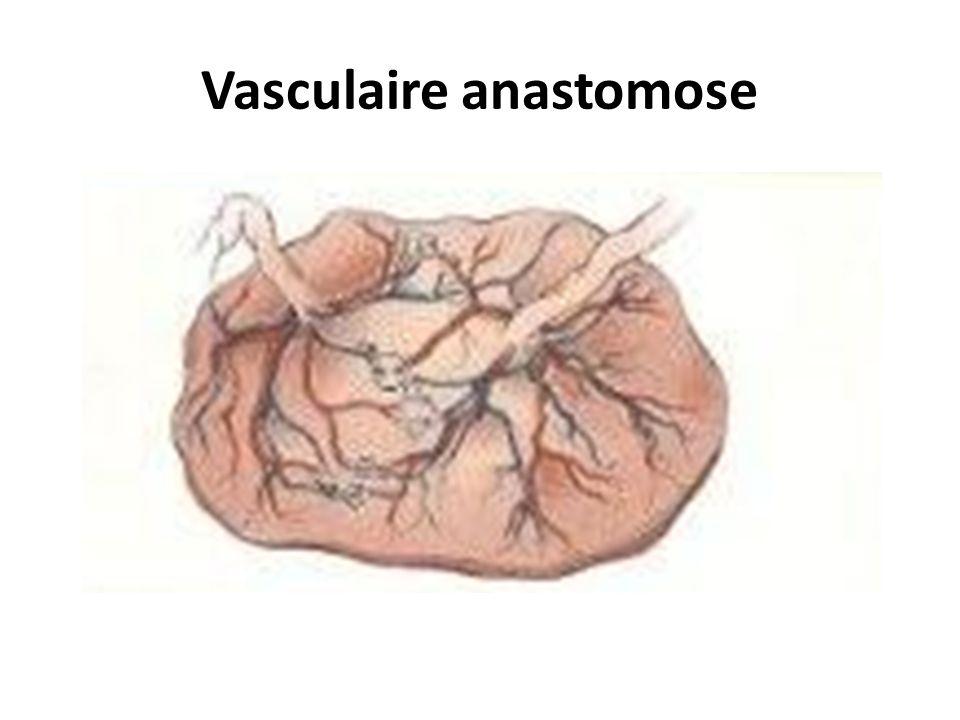 Vasculaire anastomose