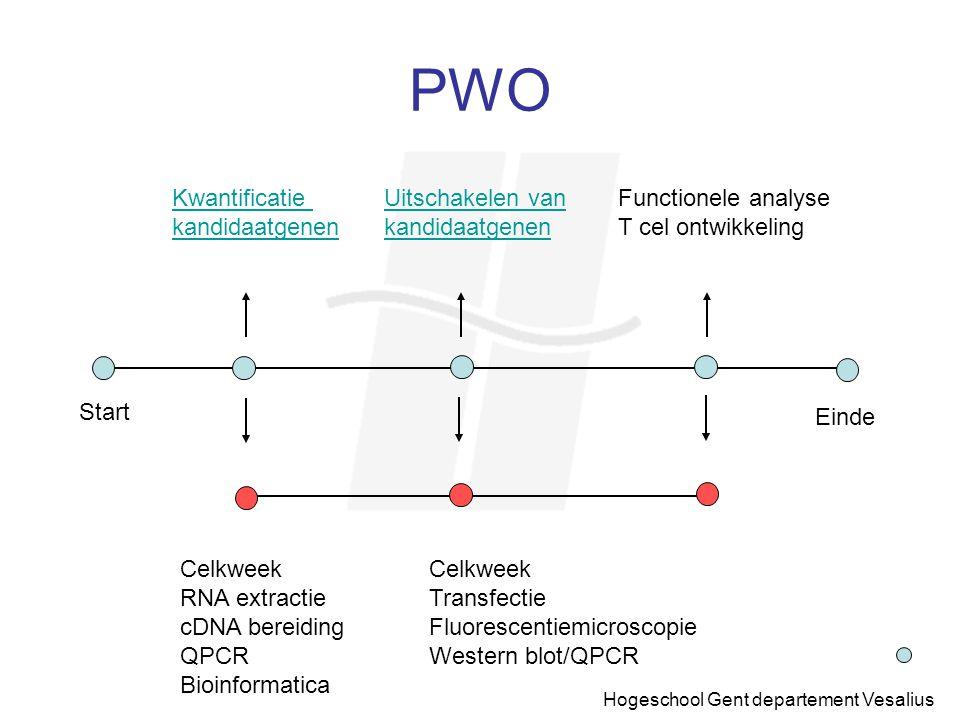 Hogeschool Gent departement Vesalius PWO Start Einde Kwantificatie kandidaatgenen Uitschakelen van kandidaatgenen Functionele analyse T cel ontwikkeli