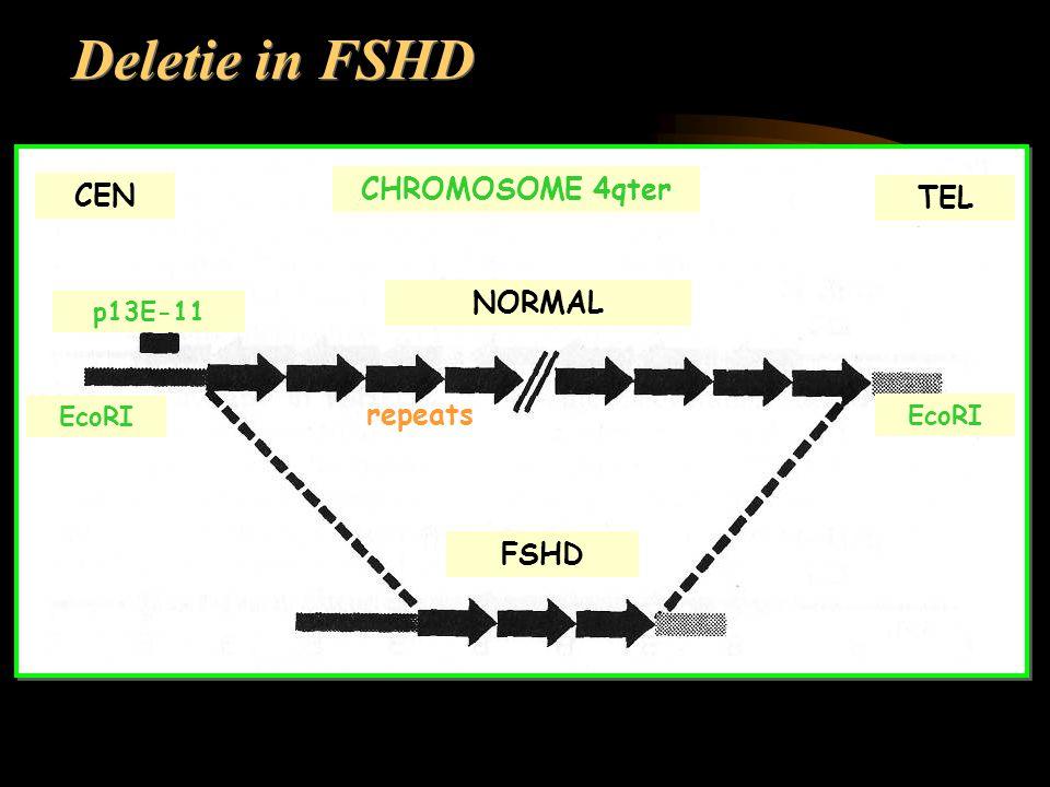 NORMAL FSHD TEL CEN p13E-11 EcoRI Deletie in FSHD CHROMOSOME 4qter repeats